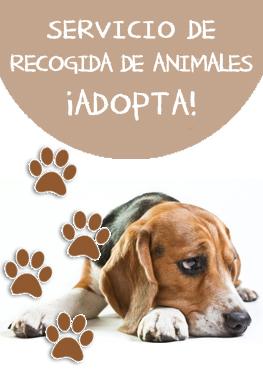 Servicio de recogida de animales