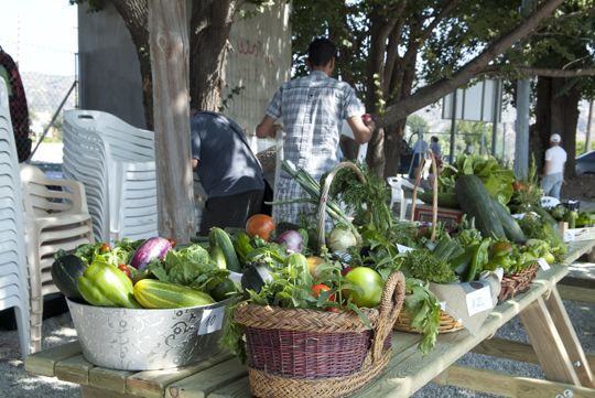 "Numerosos asistentes a la ""Cata de Tomates Ecológicos e Intercambio de Semillas"""