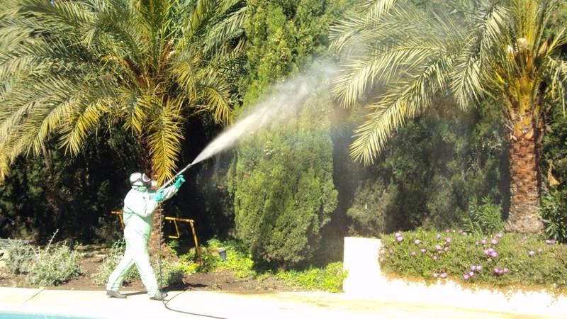 Gestión de plagas y enfermedades en las zonas verdes del municipio
