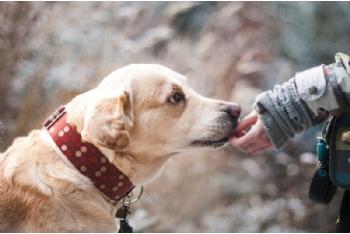 Atención de mascotas en viviendas con personas infectadas o con síntomas por Covid-19