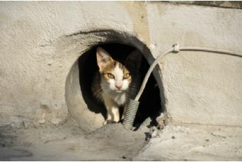 Bienestar Animal renueva el programa CES para el mantenimiento de colonias de gatos ferales