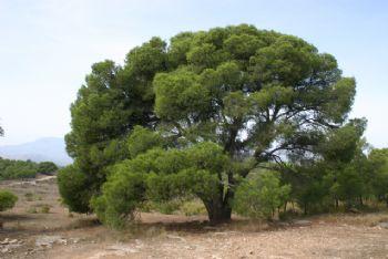 Catálogo árboles y arboledas (2004)